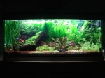 Aquariums plantés - Aquascaping 1111-44