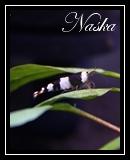 Naska