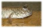 Vos projets d'aquariums et de bassins  1498-93