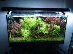 Aquariums plantés - Aquascaping 489-2