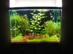 Aquariums plantés - Aquascaping 877-30
