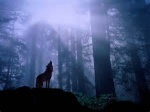 Aurora Silverwolf