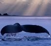Deepwaters