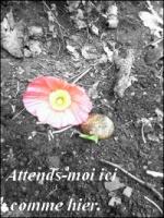 Aloup