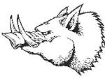 Phacochère