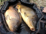 Pêche du sandre 2232-85