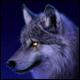 GreyWolf