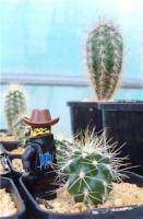 Crazy_Cactus