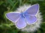Бабочка Даша