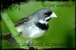 felipe-wesley
