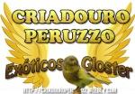 FRANCISCO PERUZZO