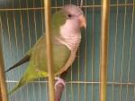 fofa birds