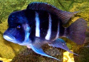 tropicalfishsuccess