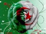 عبير الجزائر