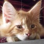 Offres de chats et chatons disponibles des membres du forum 156-55