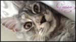 Offres de chats et chatons disponibles des membres du forum 314-62