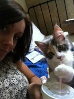 Offres de chats et chatons disponibles des membres du forum 34-88