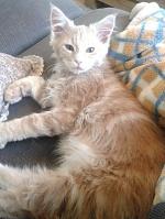 Offres de chats et chatons disponibles des membres du forum 363-46
