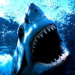 DJ_Shark