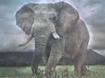 elefante-temerario