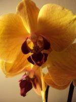 Vous pensez que votre orchidée est malade ? Vous voyez des bestioles ? Vous souhaitez parler d'un produit phyto ? 107-96