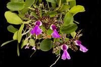 News du Monde des Orchidées 1118-2