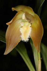 Galerie de vos Orchidées en fleurs et Orchidées in situ 1131-59