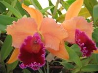 Galerie de vos Orchidées en fleurs et Orchidées in situ 1222-22