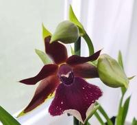 Vous pensez que votre orchidée est malade ? Vous voyez des bestioles ? Vous souhaitez parler d'un produit phyto ? 1357-78