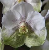 Vous pensez que votre orchidée est malade ? Vous voyez des bestioles ? Vous souhaitez parler d'un produit phyto ? 190-28