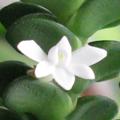 Vous pensez que votre orchidée est malade ? Vous voyez des bestioles ? Vous souhaitez parler d'un produit phyto ? 196-40