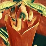 Paphiopedilum botaniques 25-75