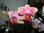 Vous pensez que votre orchidée est malade ? Vous voyez des bestioles ? Vous souhaitez parler d'un produit phyto ? 526-95