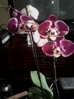 Vous pensez que votre orchidée est malade ? Vous voyez des bestioles ? Vous souhaitez parler d'un produit phyto ? 589-11