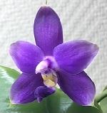 Tout savoir sur les Orchidées Terrestres 629-80