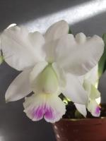 Reportages (TV, Web) sur les orchidées 631-98
