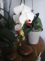 Vous pensez que votre orchidée est malade ? Vous voyez des bestioles ? Vous souhaitez parler d'un produit phyto ? 652-39