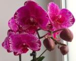 Vous pensez que votre orchidée est malade ? Vous voyez des bestioles ? Vous souhaitez parler d'un produit phyto ? 703-59