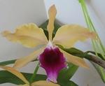 Orchidées en direct du Brésil : producteurs, collections privées, balades exotiques 739-42