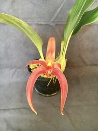 Identifier votre orchidée 913-74