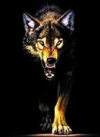 lobo do monte