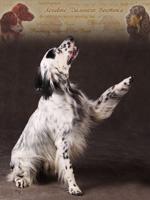 Охотничьи собаки Дальнего Востока 12-5