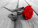 Rose^^