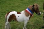 Ats Miniature Equines