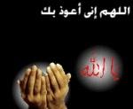 الليثى محمود