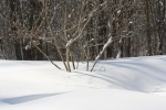 Wintertroll