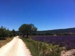 Lavenderblue