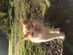 KittyBrewster