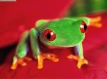 Frogger1093