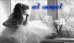 amel.dhahoua